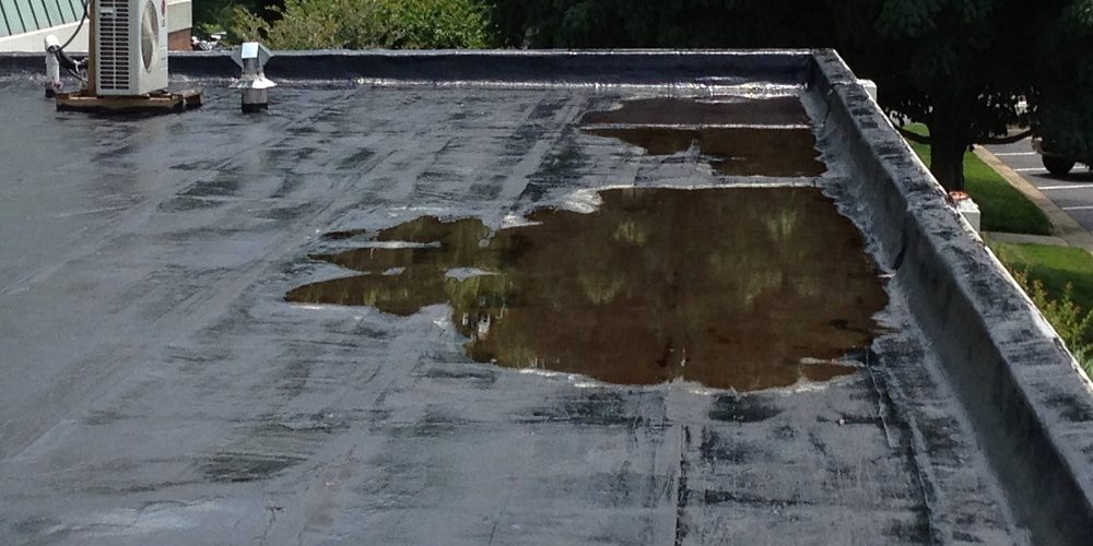 A large puddle that has formed on a concrete flat roof, reflecting the sky and the trees next to it.